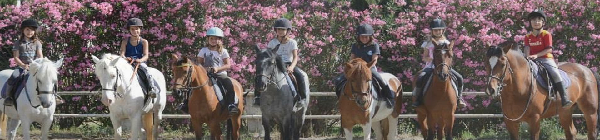 cheval poney club avignon